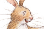 Petra Brown Illustration - petra, brown, petra brown, watercolour, paint, painted, commercial, traditional, trade, picture book, picturebook, animals, bunnies, bunny, rabbits