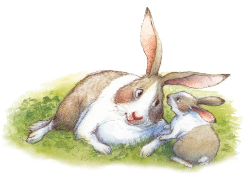 Petra Brown Illustration - petra, brown, petra brown, watercolour, paint, painted, commercial, traditional, trade, picture book, picturebook, animals, rabbits, bunnies, bunny