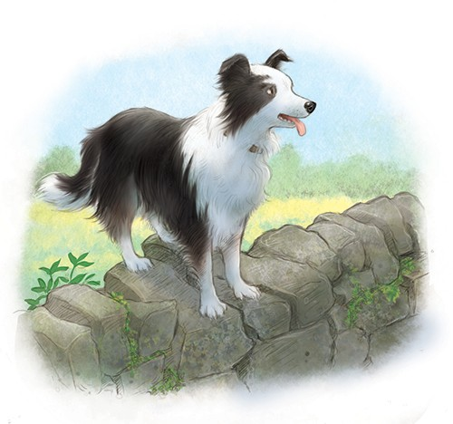 Petra Brown Illustration - Click here to enlarge  etra, brown, petra brown, watercolour, paint, painted, commercial, traditional, trade, picture book, picture book, cute, sweet, young, dog, collie, sheepdog, farm, wall, country